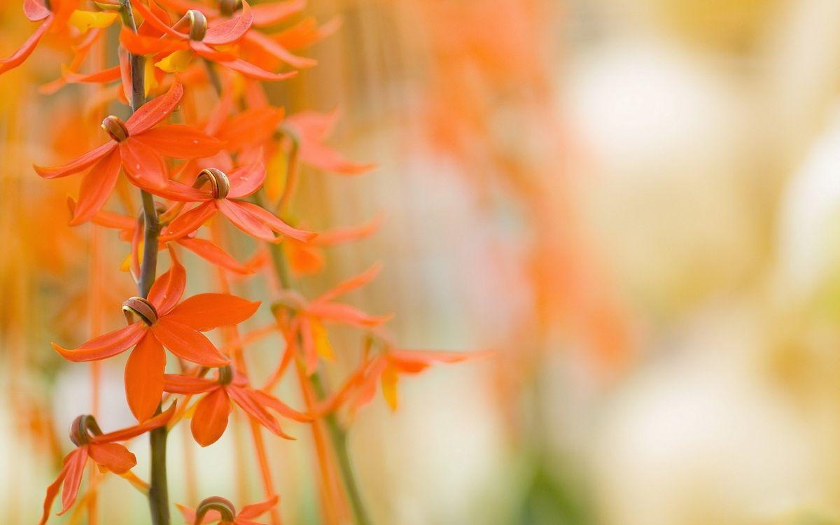 Фото бесплатно стебли, оранжевые, цветы - на рабочий стол