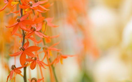 Photo free stems, orange, flowers