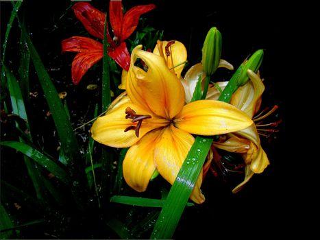 Фото цветы картинки, флора