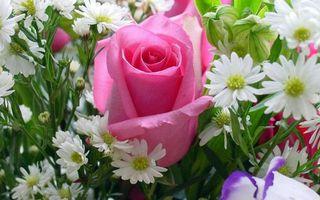 Бесплатные фото раза,цветочки,лепестки,белые,розовые,листья,стебли