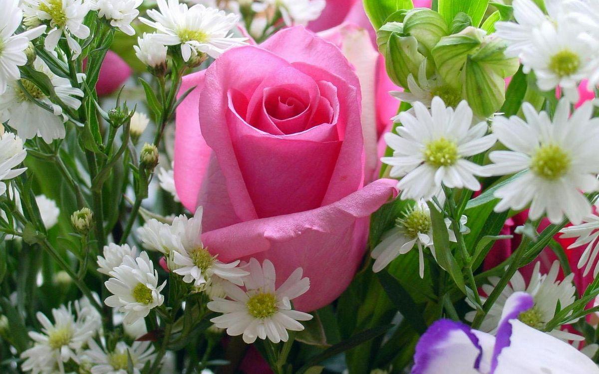 Фото бесплатно раза, цветочки, лепестки, белые, розовые, листья, стебли, зеленые, цветы