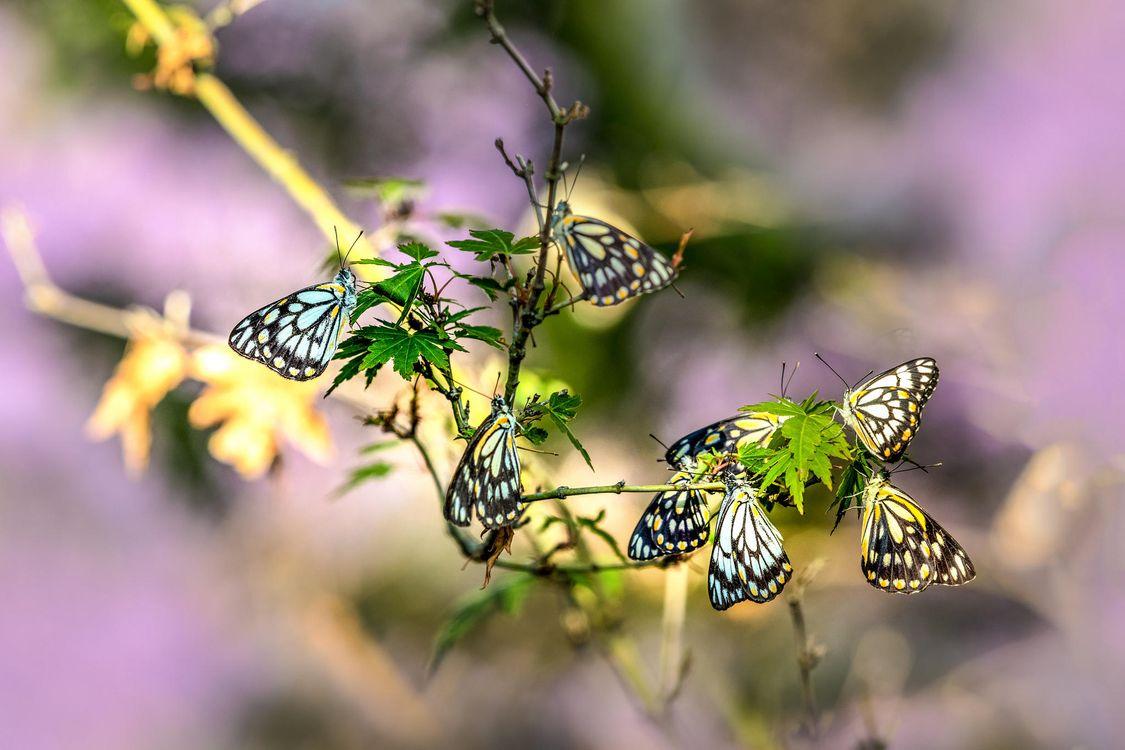 Фото бесплатно ветка, бабочки, насекомые, насекомые