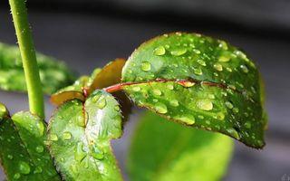Заставки растение,стебель,листья,зеленые,прожилки,капли,вода