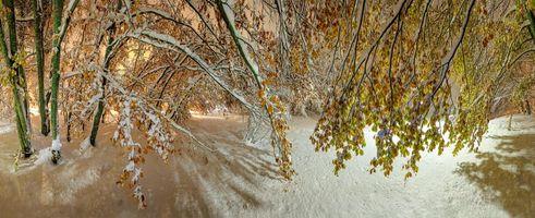 Бесплатные фото зима,парк,лес,деревья,сугробы,ветки,пейзаж