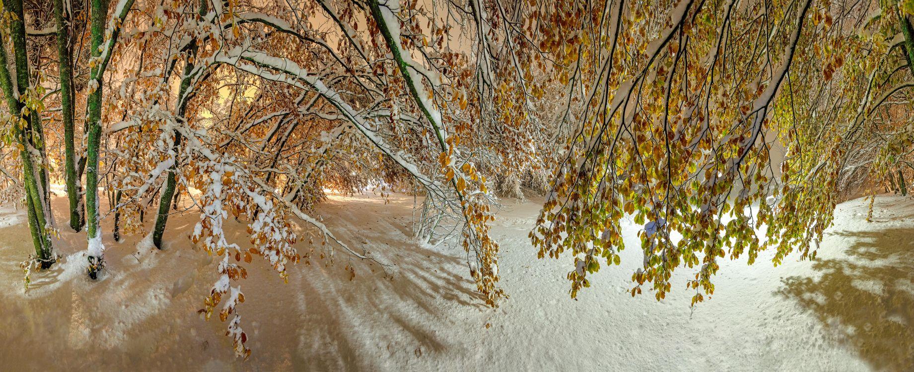 Фото бесплатно зима, парк, лес - на рабочий стол