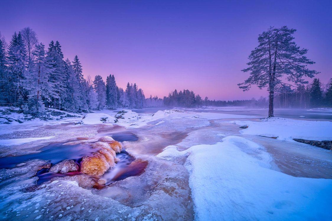 Фото бесплатно Kiiminkijoki River, Finland, река Кииминкийоки, Финляндия, зима, снег, река, деревья, пейзажи