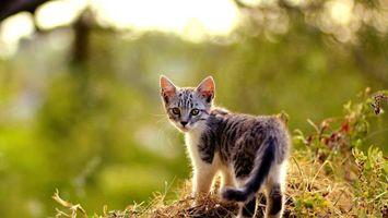 Бесплатные фото котенок,трава,лес,смотрит