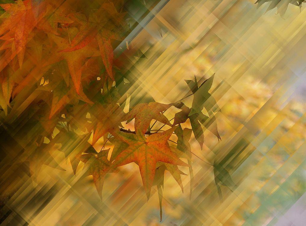 Фото бесплатно осенняя композиция, ветки, листья, абстракция, рендеринг