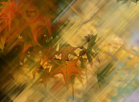 Photo free autumnal composition, branches, leaves