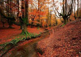Бесплатные фото Otzarreta,Bizkaia,Spain,лес,речка,деревья,осень