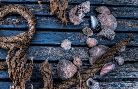 Фото бесплатно настил, ракушки, верёвка