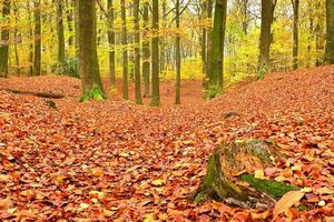 Бесплатные фото осень,лес,деревья,пейзаж,природа