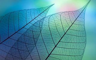 Заставки растения, листики, структура листьев