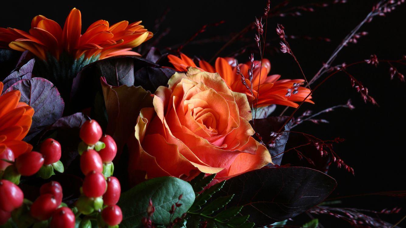 Фото бесплатно цветы, розы, роза, флора, цветы