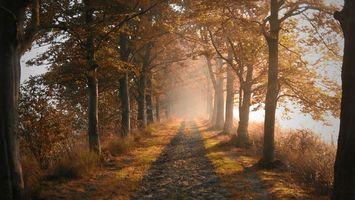 Заставки осень,дорога,трава,деревья,туман