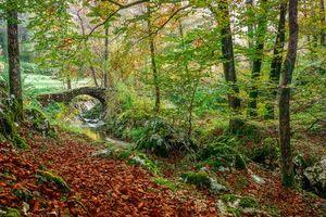 Бесплатные фото осень,речка,ручей,мост,лес,деревья,природа