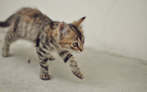 Бесплатные фото котенок,морда,лапы,шерсть,серый