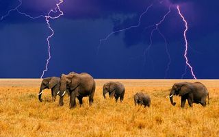 Заставки слоны,семья,трава,небо,гроза,молния,разряды
