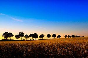 Бесплатные фото закат,поле,цветы,деревья,пейзаж