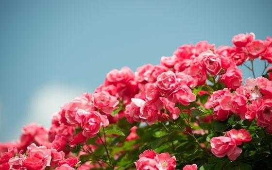 Фото бесплатно кустарник, ветви, листья