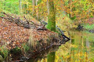 Бесплатные фото лес,деревья,осень,речка,природа