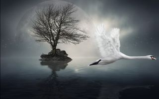 Фото бесплатно лебедь, полет, клюв