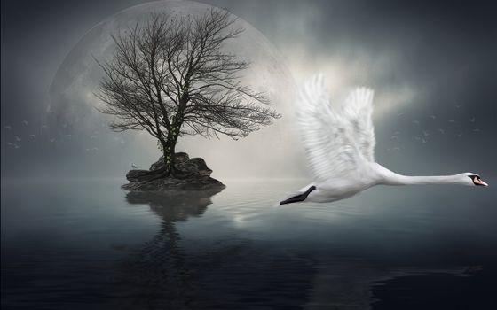 Бесплатные фото лебедь,полет,клюв,крылья,перья,лапы,озеро,остров,камни,дерево,небо,планета