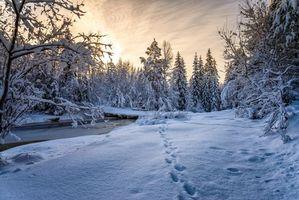 Бесплатные фото Норвегия, ручей, речка, зима, закат, снег, деревья