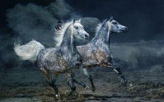 Заставки шторм, лошади, кони