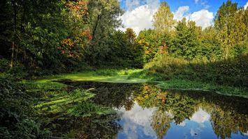 Бесплатные фото заводь,лес,деревья,лиственница,природа