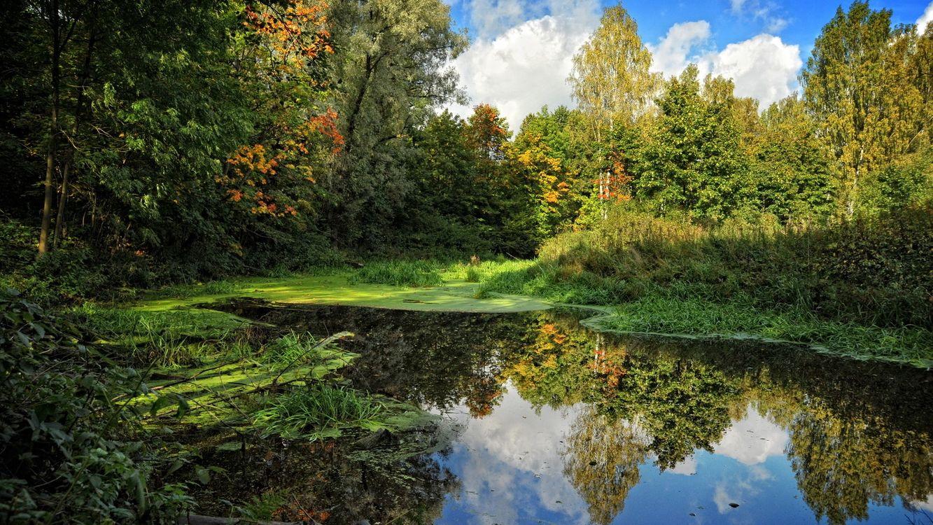 Фото бесплатно заводь, лес, деревья, лиственница, природа, природа