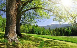 Бесплатные фото лето,солнце,лучи,ветки,дерево,лес,холм