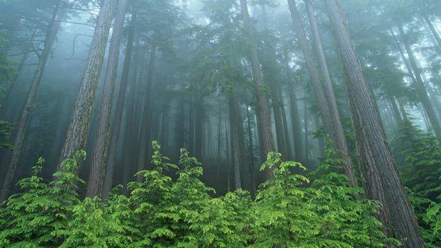 Фото бесплатно лес, темный, страшный