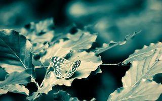 Фото бесплатно бабочка, лист, клена