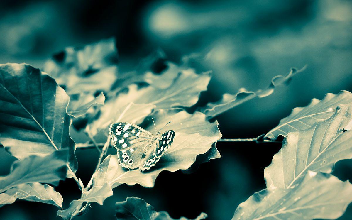 Фото бесплатно бабочка, лист, клена, фото, черно-белое, природа, разное, разное