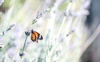 Photo free butterfly, flowers, field