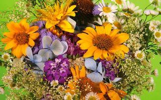 Бесплатные фото букет, цветы, разные, лепестки, стебли, композиция