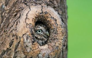Бесплатные фото дерево,филин,сова,перья,клюв,глаз,кора