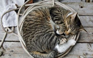 Фото бесплатно кошка, веревка, причал