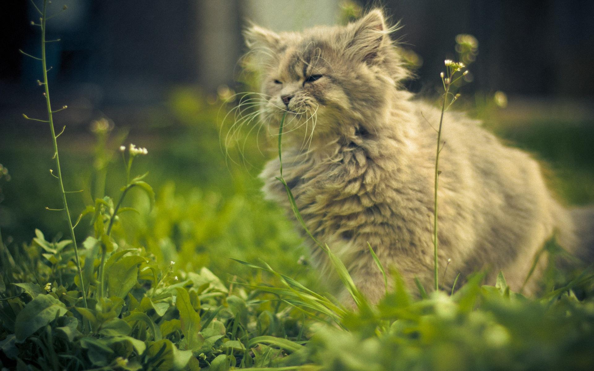 кот животное природа  № 2038208 без смс