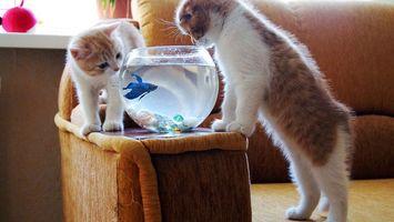Photo free kittens, fish, two