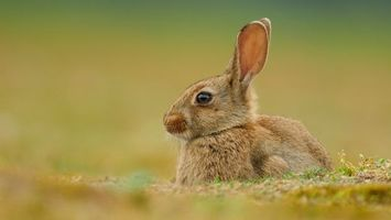 Photo free grass, ears, animals