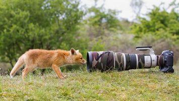 Фото бесплатно лиса, рыжая, фотоаппарат