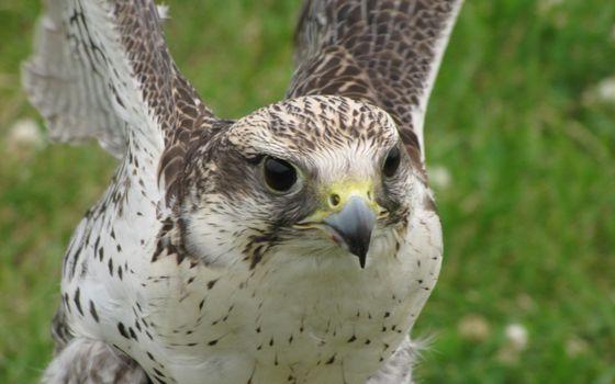 Photo free eagle, feathers, plumage