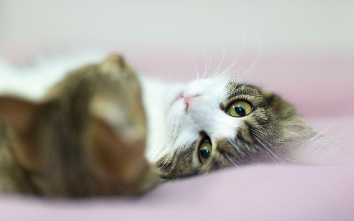 Фото бесплатно пара, морда, уши, глаза, усы, шерсть, кошки, кошки