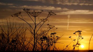 Фото бесплатно темно, трава, небо