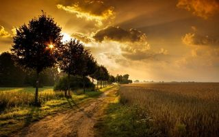 Photo free field, wheat, road
