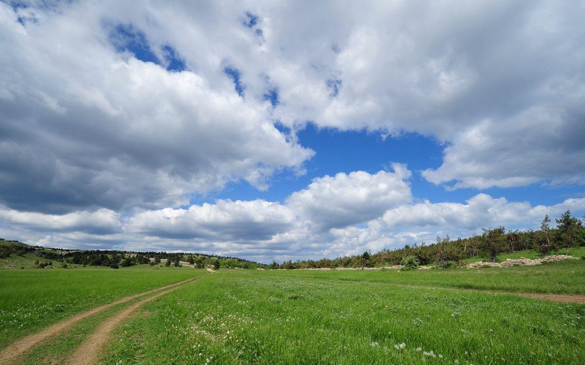 Фото бесплатно поле, трава, колея - на рабочий стол