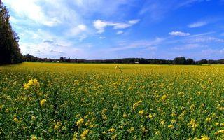 Бесплатные фото поле,цветы,желтые,лепестки,дома,небо,лето