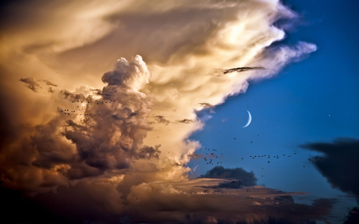 Фото бесплатно птицы, луна, звезды, облока, небо, ночь, птицы